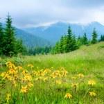 Beautiful mountains landscape — Stock Photo #7403179