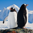 Two penguins dreaming — Stock fotografie #7403398