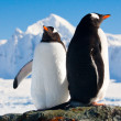 Two penguins dreaming — Stock Photo #7403404
