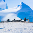 Penguins in Antarctica — Stock fotografie