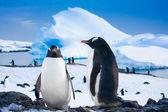 δύο πιγκουΐνους που ονειρεύεται — Φωτογραφία Αρχείου