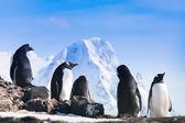Velká skupina tučňáci — Stock fotografie