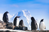 Grande grupo de pinguins — Foto Stock