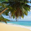 Stock Photo: Palm over tropical beach