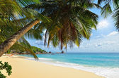 Palm over tropical beach — Stock Photo