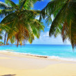 Palm over tropical beach — Foto Stock