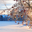 Winter time landscape — Stock Photo #7355210