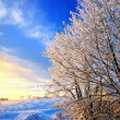 Winter time landscape — Stock Photo #7355217