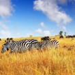 African wildlife — Stock Photo #7698706