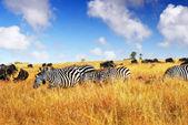 Afrikanska djurlivet — Stockfoto