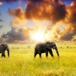 African wildlife - Stock Photo