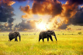 African wildlife — Stock Photo