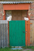 Green door and white cats — Stock Photo