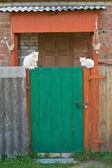 зеленая дверь и белых кошек — Стоковое фото