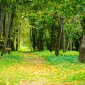 Jesienna aleja — Zdjęcie stockowe