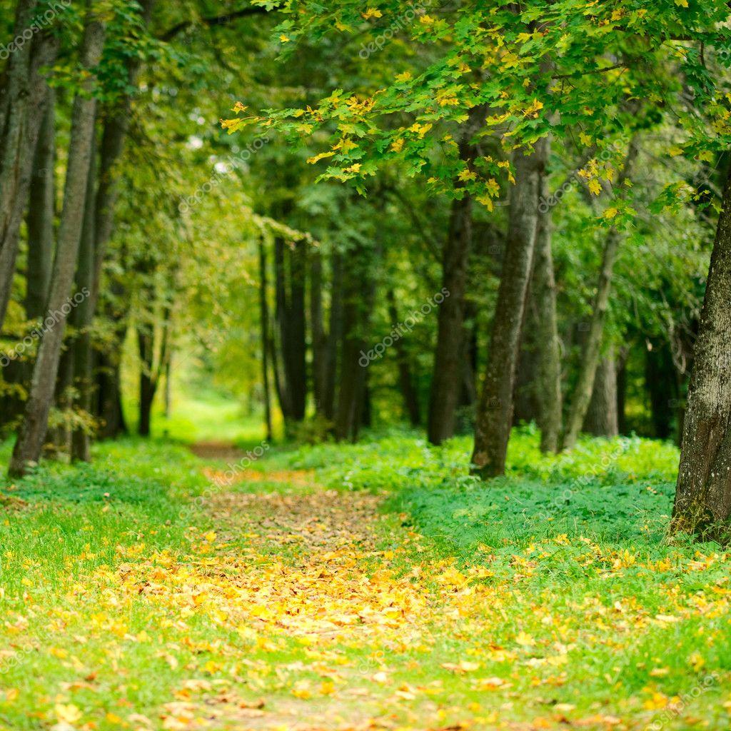 Фотообои Autumn alley