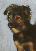 Pintura pastel del perro de pastor australiano miniatura — Foto de Stock