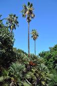 Muchas palmeras diversas — Foto de Stock