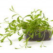 Tarragon spice — Stock Photo #7010837