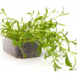 Tarragon spice — Stock Photo #7010933