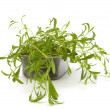 Tarragon spice — Stock Photo #7011835