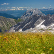 Alps flowers field on mountains background. Bavarian Alps. — Stock Photo