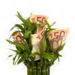 Money growing concept — Stock Photo