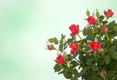 美丽的花卉背景 — 图库照片