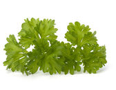 Parsley herb — Foto de Stock