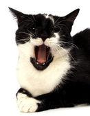 Cat isolated on white background — Stock Photo