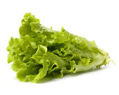 Lettuce salad isolated on white background — Stock Photo