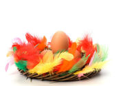 Easter egg in nest isolated on white background — Stock Photo