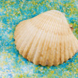Stock Photo: Sea shell on salt grains.