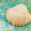Sea shell on salt grains. — Stock Photo