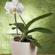 Beautiful white orchid — Stock Photo #6846079