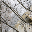 Stock Photo: Bird on a winter tree branch
