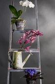 Beautiful garden flowers on metal stepladder — Stock Photo