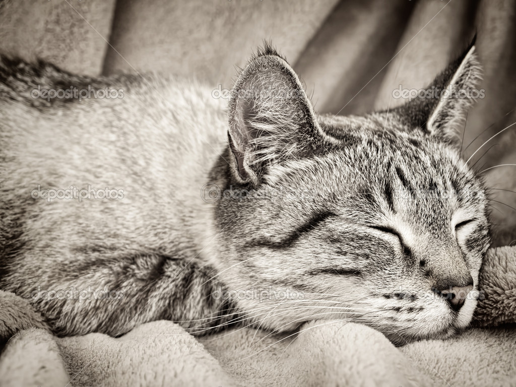 Sleeping cat over the beige  — Stock Photo #6790355