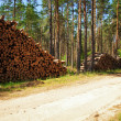 Logs in the forest - Stock Photo