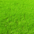Grass background — Stock Photo