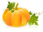 Pumpkin — Stockvektor