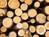Logs in the forest — Stock Photo