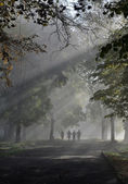 On the foggy road — Stock Photo