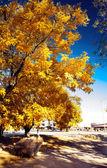Urban autumn landscape — Stock Photo