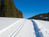 Cross-country ski track — Stock Photo