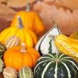 Pumpkin Still life — Stock Photo #6853298