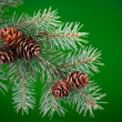 Branch of Blue Spruce with cones — Stock Photo