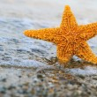 Starfish ashore — Stock Photo