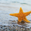 Stock Photo: Starfish ashore