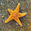 Starfish on sea coast — Stock Photo #6771953